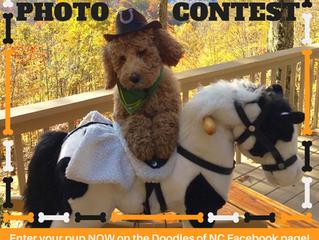 Enter Howl-o-ween Dog Photo Contest
