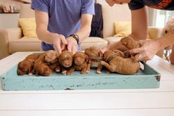Exceptional Puppy Health Guarantee