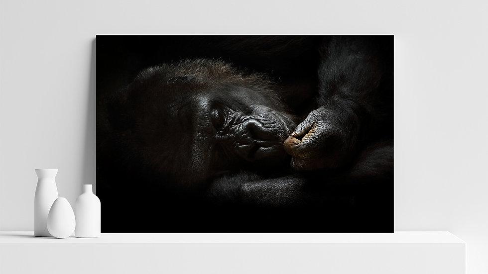 Quadro con stampa fotografica di gorilla
