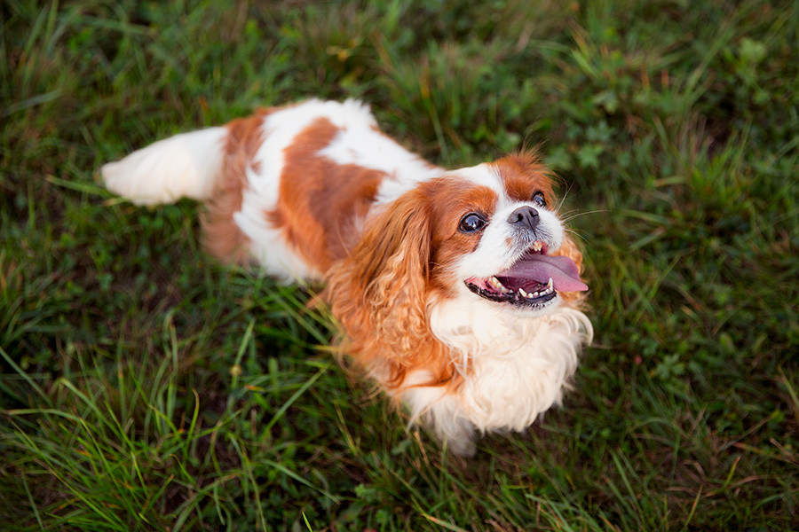 Fotografia cani e altri animali Locarno Ticino Svizzera