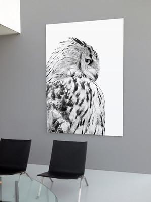 Stampa nel vetro in bianco e nero - Gufo grigio