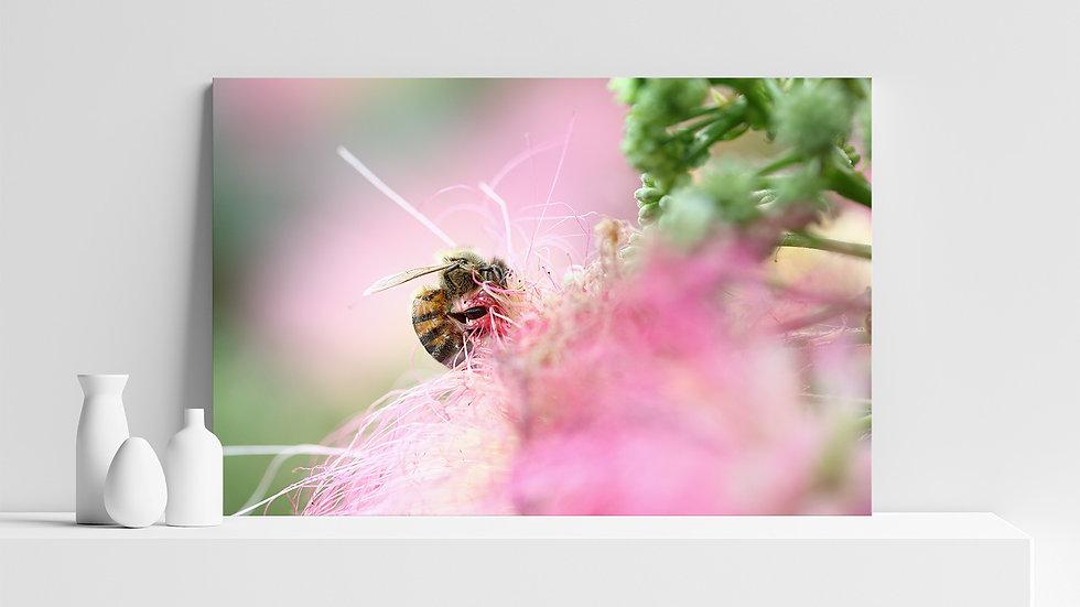 Quadro con stampa fotografica di ape europea