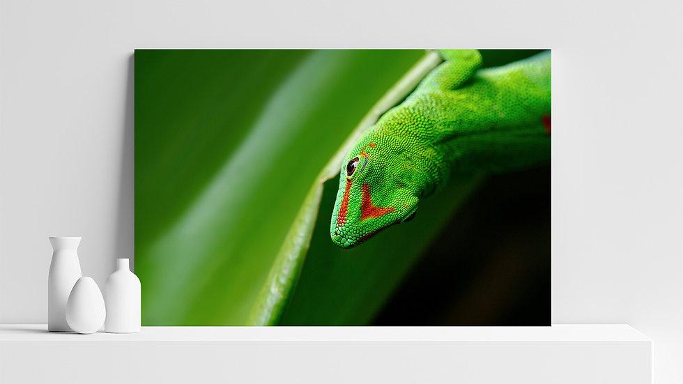 Quadro con stampa fotografica di Geco del Madagascar