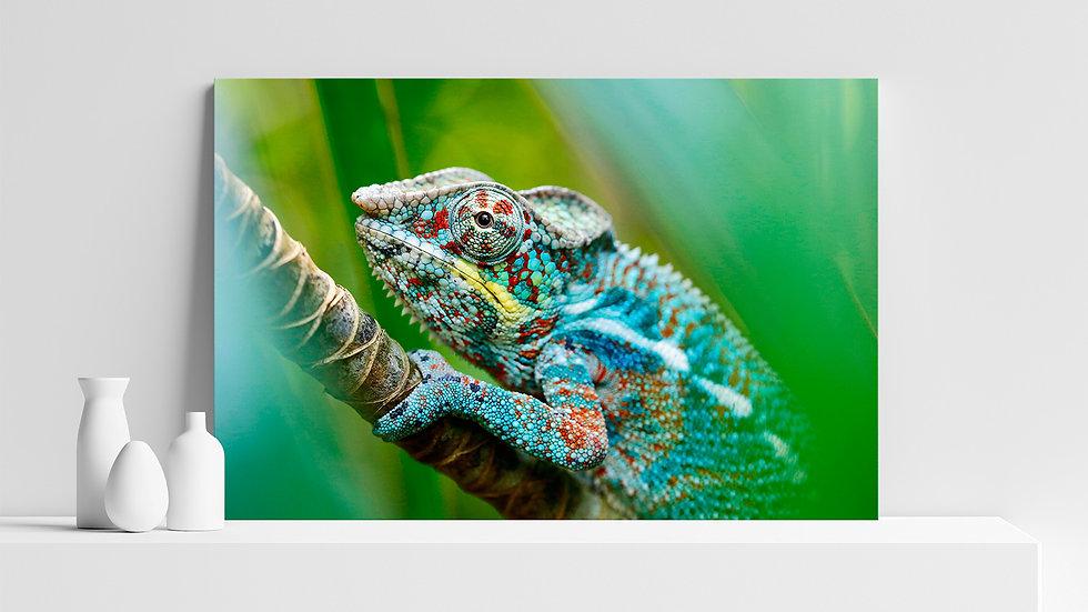 Quadro con stampa fotografica di camaleonte