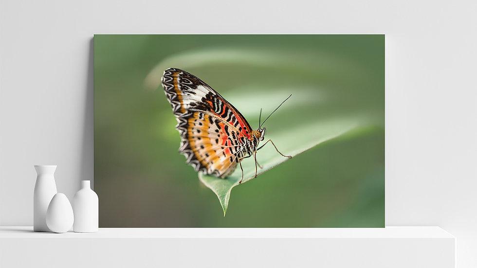 Quadro con stampa fotografica di farfalla dalle ali a merletto