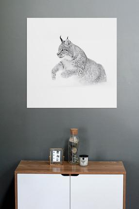 Impression noir et blanc sous verre - Lynx