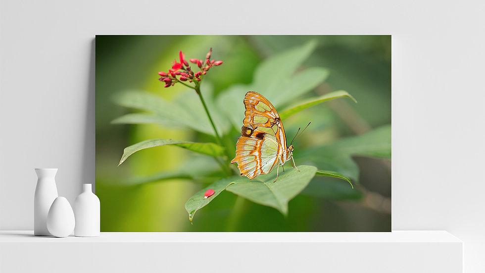 Quadro con stampa fotografica di farfalla Malachite