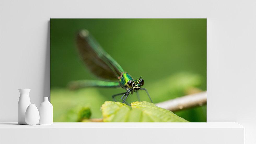 Quadro con stampa fotografica di libellula verde