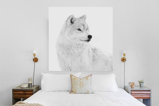 Impression noir et blanc sous verre - Loup arctique