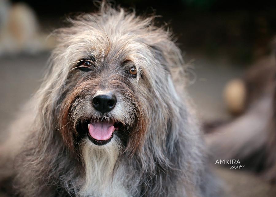Fotografo cani e altri animali Locarno Ticino