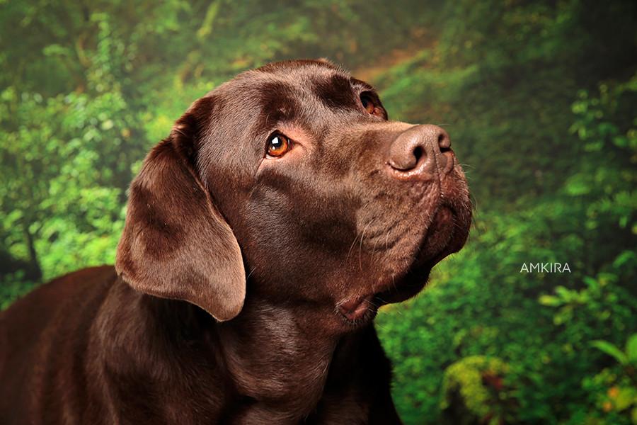 Fotografia cani Ticino