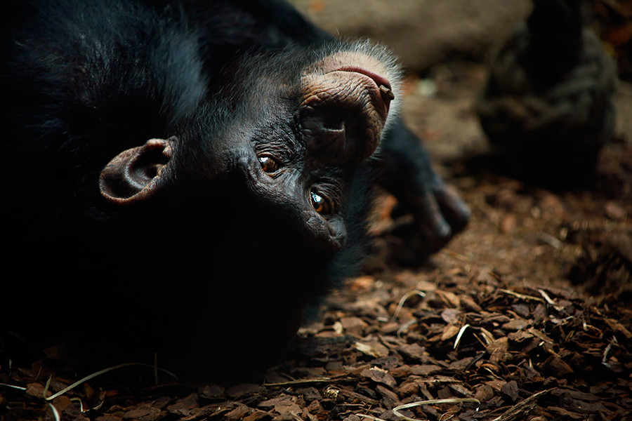 Fotografo animali Ticino
