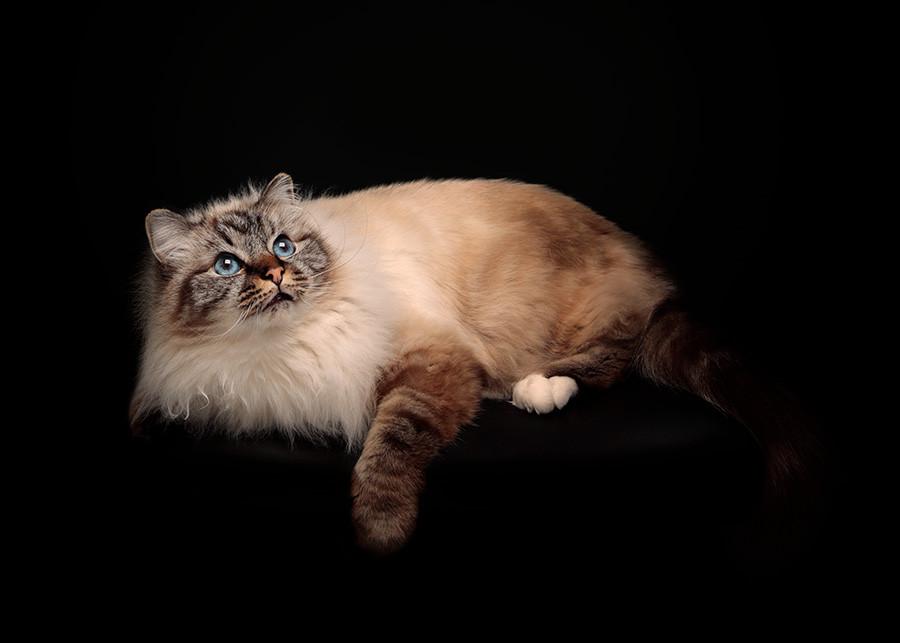Fotografo gatti Ticino