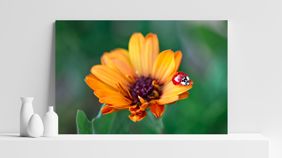 Quadro con stampa fotografica di coccinella su fiore
