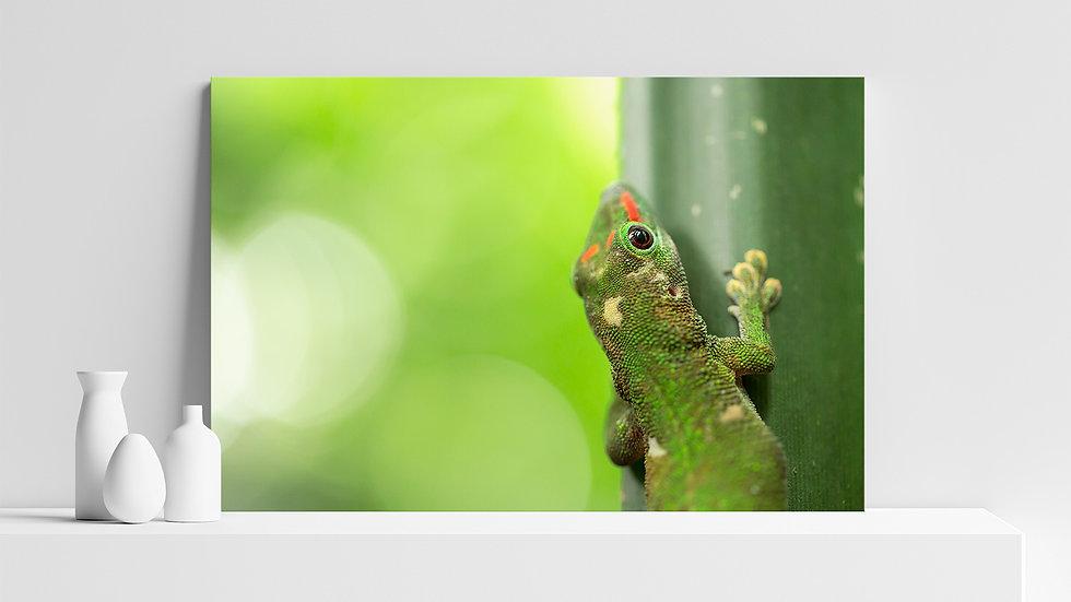 Quadro con stampa fotografica di Geco verde