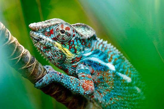 1000 colori e forme