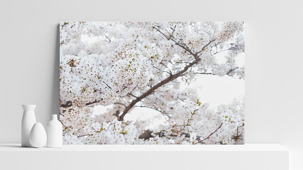 Quadro con stampa fotografica ciliegio in fiore