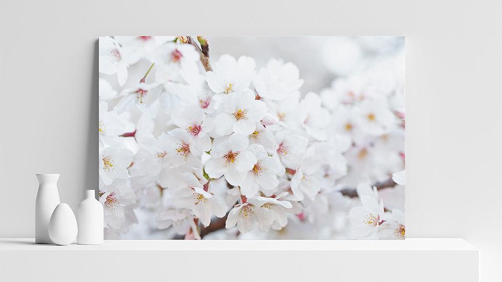 Quadro con stampa fotografica di fiori di ciliegio