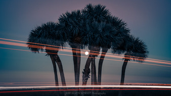 Palms In The Moonlight