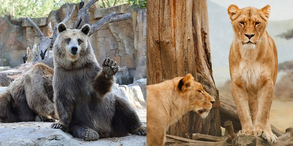 Zoo & Wildlife Pathology - A Comparative Approach
