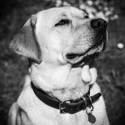 Pet Photography_14.JPG