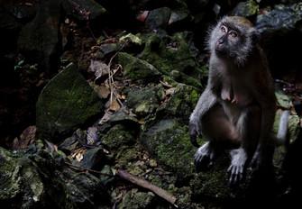 Animal Photography_012.JPG