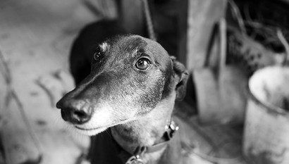 Pet Photography_06.jpg