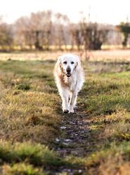 Pet Photography_18.jpg
