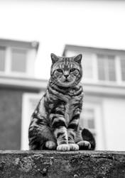 Pet Photography_021.JPG