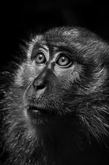 Animal Photography_05.jpg