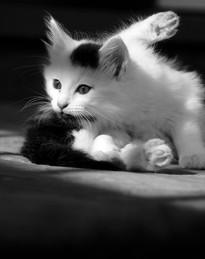 Pet Photography_11.jpg