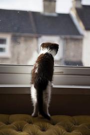 Pet Photography_02.jpg