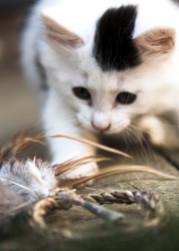 Pet Photography_12.jpg