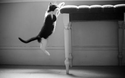 Pet Photography_03.jpg