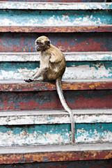 Animal Photography_04.jpg