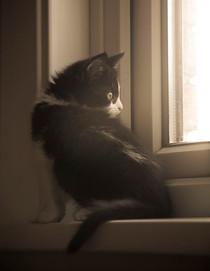 Pet Photography_01.jpg