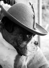 Pet Photography_07.jpg