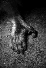 Animal Photography_03.jpg