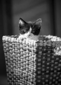 Pet Photography_04.jpg