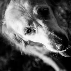 Pet Photography_17.jpg