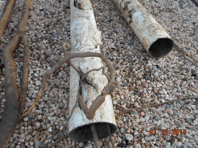 Roots in PVC sewer pipe