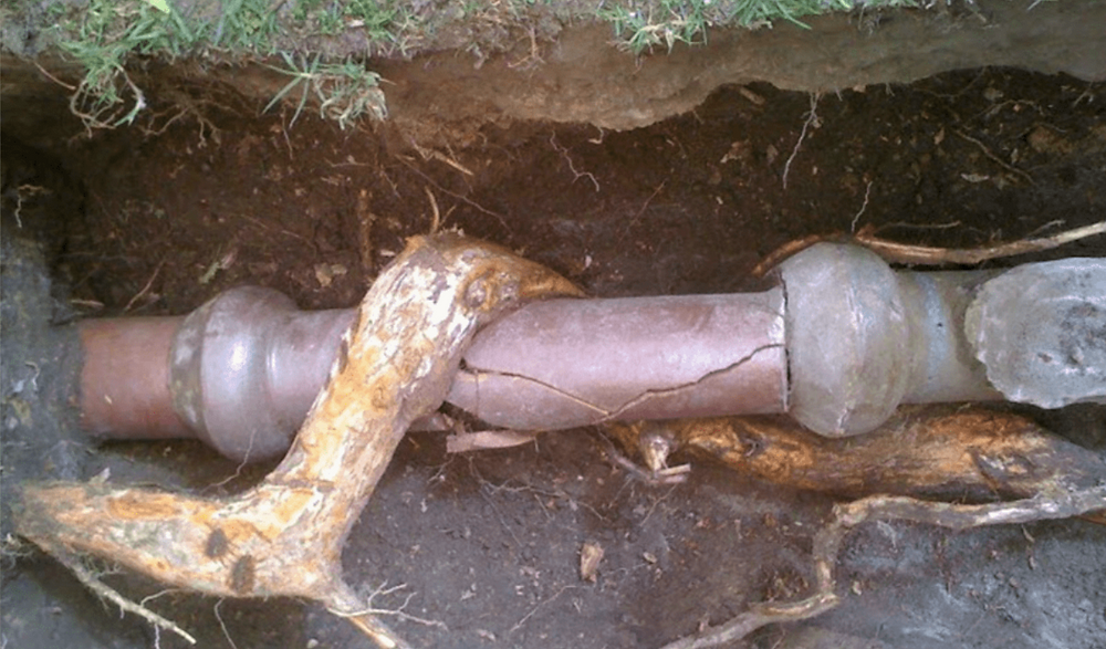 tree root, broken pipe, plumbing, sewer inspection