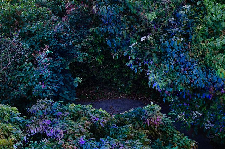 Blue_leaves.jpg