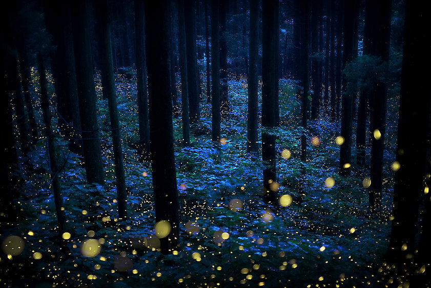 Deep_forest_fairies.jpg