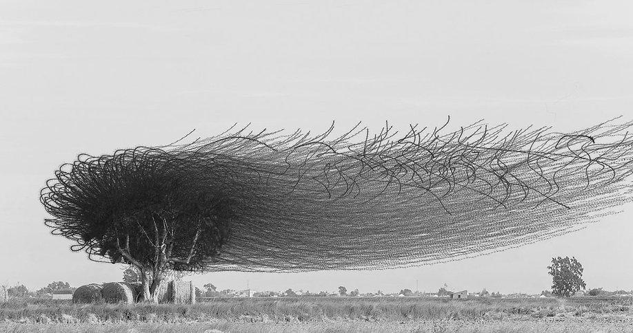 Ornithography_#152.jpg