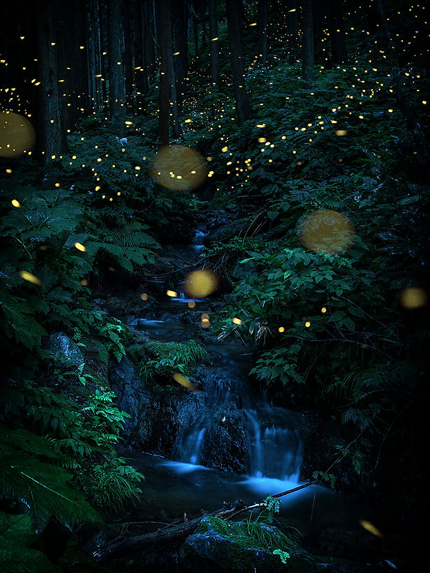 Inside_the_water_flowing_forest.jpg