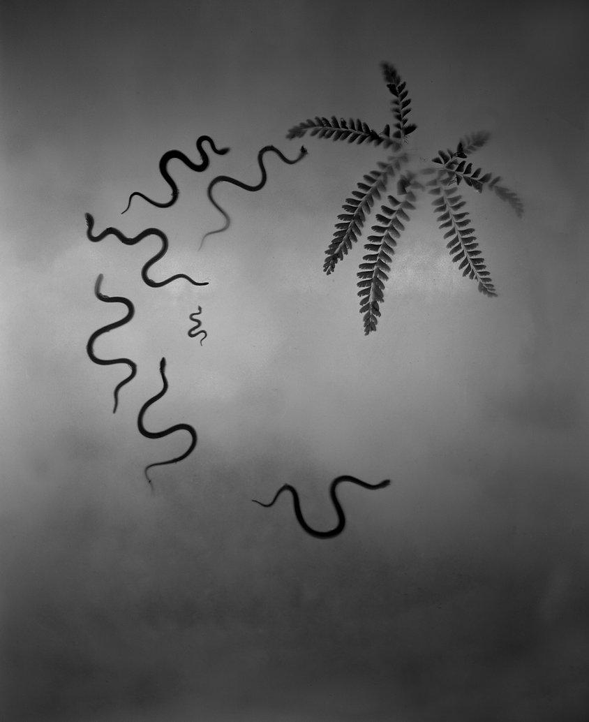 Untitled_snakes_fern.jpg