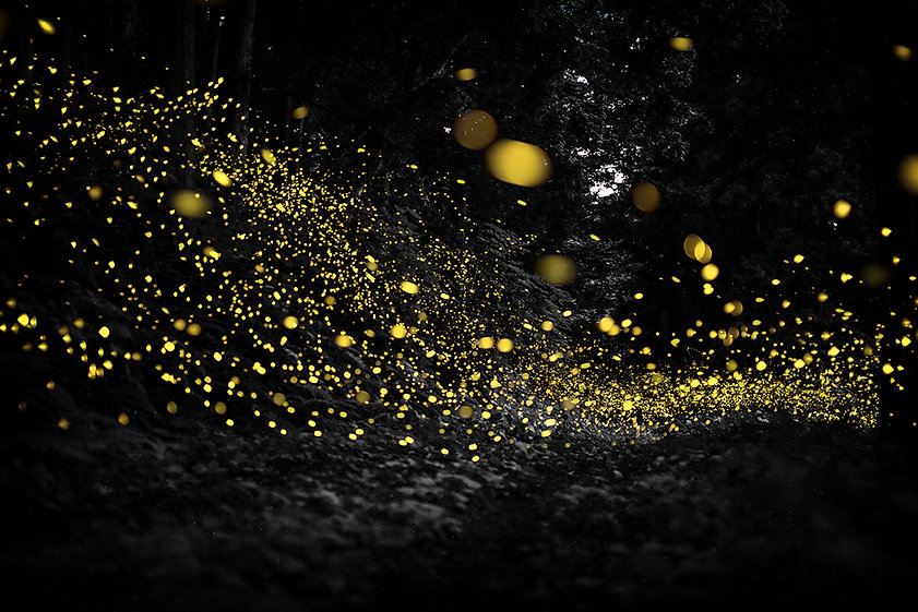 Firefly_road.jpg