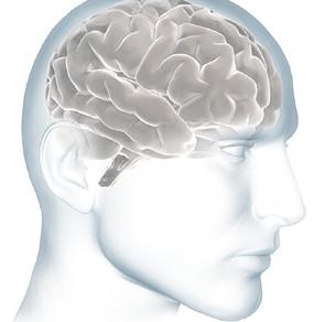 O cérebro e o Alzheimer