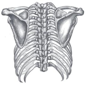 Instabilidade do ombro, Dor e Discinesia escapular: Mitos e verdades